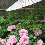 Botanblüten