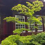 2016-06-11 II Japanischer Garten MK (19)