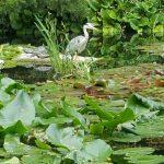 2016-06-11 II Japanischer Garten MK (9)